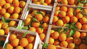 apelsin sriya