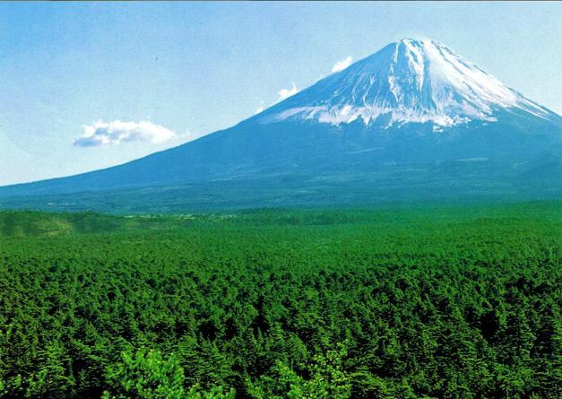 aokigahara-forest_mount-fuji